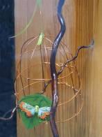 cages-et-branches